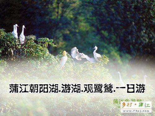蒲江朝阳湖.游湖.观鹭鸶.一日游