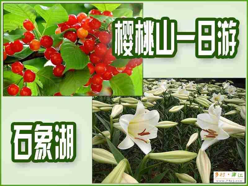石象湖、樱桃山一日游蒲江美食节推荐