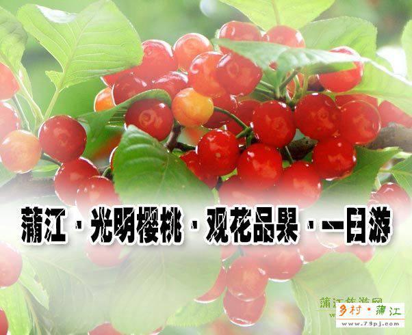 蒲江·光明樱桃·观花品果·一日游