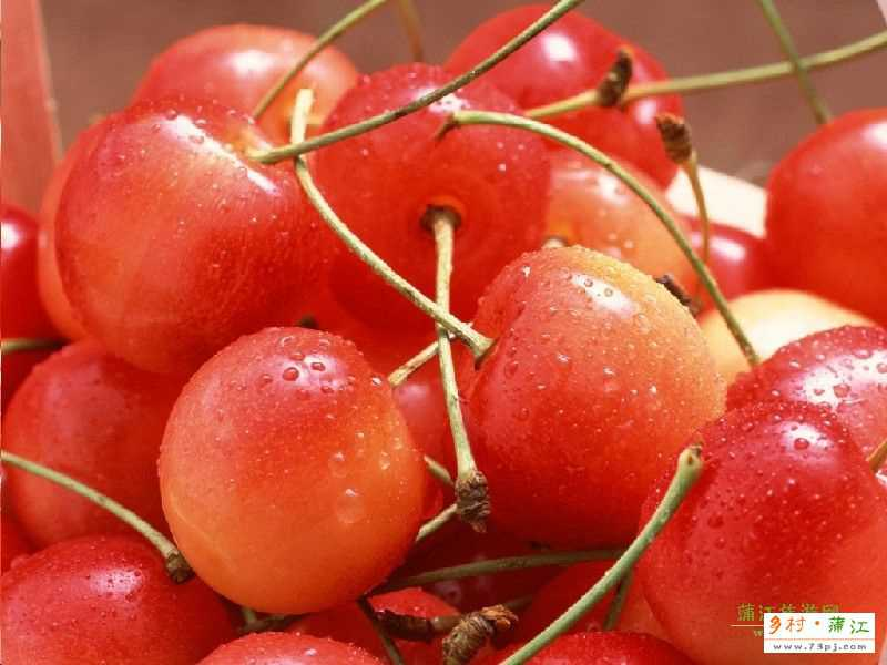 蒲江红樱桃-蒲江特产