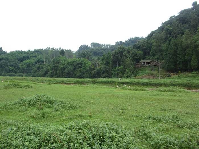 蒲江成佳长滩湖龙凤溪湿地