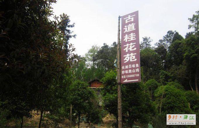 古道桂花苑