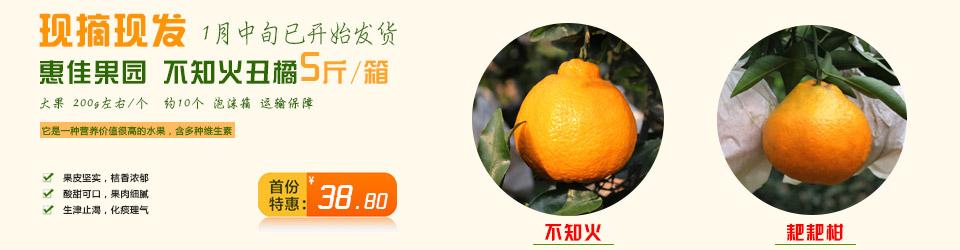 惠佳果园:主产不知火,耙耙柑,青见,碰柑等柑橘
